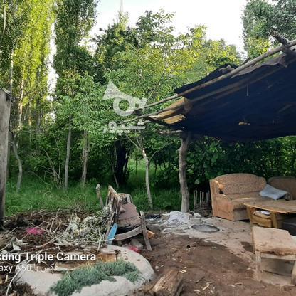 فروش 3جریب باغ جنگلی در شکرک در گروه خرید و فروش املاک در زنجان در شیپور-عکس8