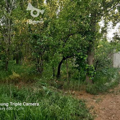 فروش 3جریب باغ جنگلی در شکرک در گروه خرید و فروش املاک در زنجان در شیپور-عکس9