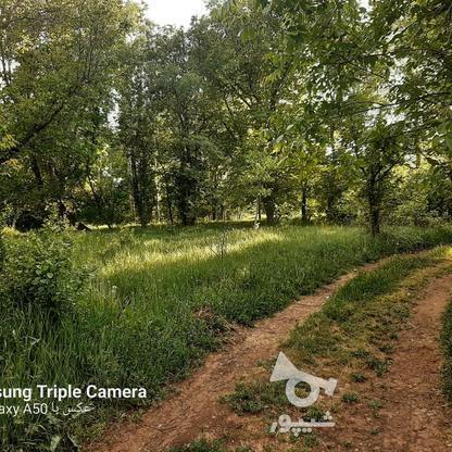فروش 3جریب باغ جنگلی در شکرک در گروه خرید و فروش املاک در زنجان در شیپور-عکس6