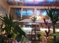 فروش ویلا 250 متر در بابلسر در شیپور-عکس کوچک