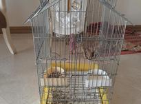 قفس طوطی هرنوع در شیپور-عکس کوچک
