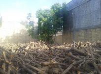 خریدوفروش چوب سیب وریشه در شیپور-عکس کوچک