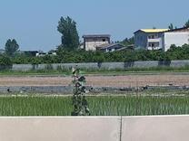فروش زمین 250 متر در بابل موزیرج چمازین در شیپور