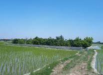 زمین صنعتی 1200 متر در بابل موزیرج بالا درویش خاک در شیپور-عکس کوچک