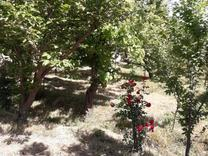 باغچه 425 متری سنددار در شهریار در شیپور