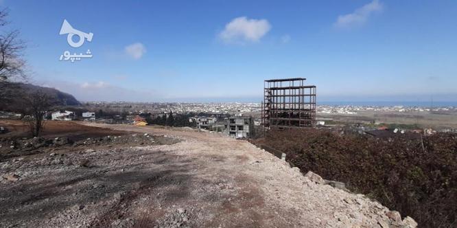 فروش زمین قطعه دو جنگل6000 متر در نوشهر در گروه خرید و فروش املاک در مازندران در شیپور-عکس3
