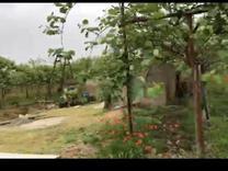 فروش باغ کیوی 18 هکتار در صومعه سرا در شیپور
