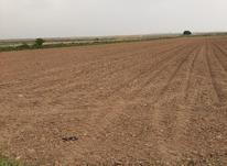 دوهکتار زمین به کاشت سیر به اجاره داده میشود در شیپور-عکس کوچک