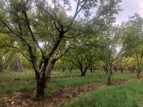 باغ میوه 400 متری در دماوند در شیپور