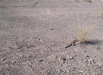 زمین فوق سندنداردپلاک داردسندمیشود در شیپور-عکس کوچک