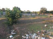 زمین مسکونی 178 متری آبمال در شیپور-عکس کوچک