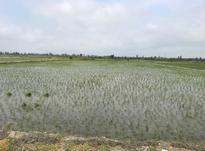 فروش زمین کشاورزی 13000 متر در بابل در شیپور-عکس کوچک