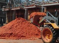 تفاله گوجه و جو در شیپور-عکس کوچک