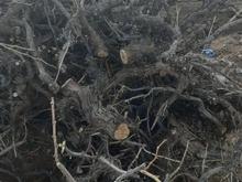 چوب کنده انگور برای زغال یا کباب.و تنور در شیپور