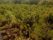 فروش باغ 4400متر روستای گل تپه در شیپور