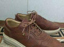 کفش چرم اسپرت در شیپور-عکس کوچک