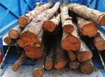 خرید و فروش انواع چوب در شیپور-عکس کوچک