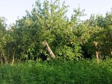 فروش زمین باغی 1000متری 10پلاک در شیپور