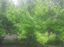 باغ کاسبی در کردزار شهریار در شیپور-عکس کوچک
