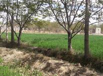 فروش زمین کشاورزی در شیپور-عکس کوچک