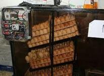 فروش دستگاه جوجه کشی 1000تایی در شیپور-عکس کوچک