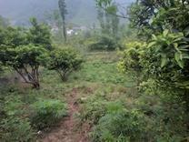 فروش زمین مسکونی 340 متر در ارتفاعات در شیپور