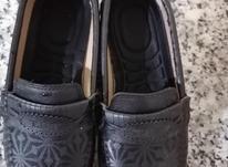 کفش سایز 39 در شیپور-عکس کوچک
