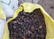 فروش خرمای کده در شیپور-عکس کوچک