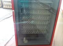 دستگاه جوجه کشی در شیپور-عکس کوچک