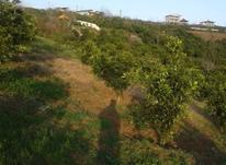 فروش زمین کشاورزی 3900 متر در بابل(بزچفت) در شیپور-عکس کوچک