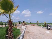 فروش زمین مسکونی 159 متر در سرخرود در شیپور