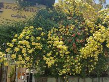 نیازمند کمک آشپز مسلط به غذاهای ایرانی فقط ناهارپز در شیپور