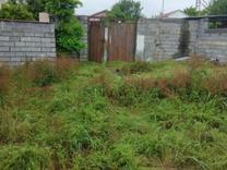فروش زمین باغ 1050 متر در آمل در شیپور