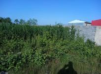 فروش زمین 184 متر در جاده چمخاله کوچه خیری در شیپور-عکس کوچک