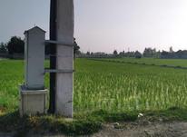 فروش زمین مسکونی 1800 متر در فریدونکنار در شیپور-عکس کوچک