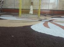 پشت قفس معاوضه بابلبل کمری در شیپور-عکس کوچک
