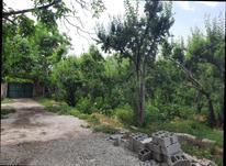 فروش زمین کشاورزی 500 متر در شهریار در شیپور-عکس کوچک