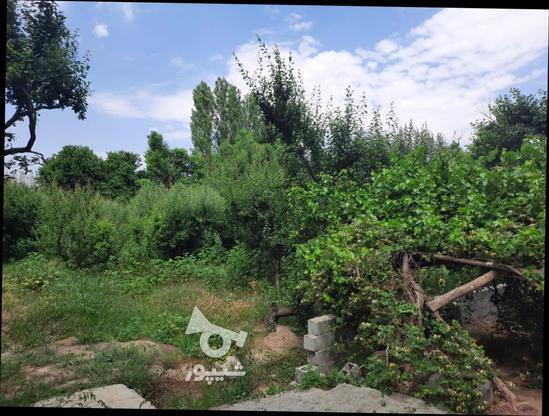 فروش زمین کشاورزی 500 متر در شهریار در گروه خرید و فروش املاک در تهران در شیپور-عکس4