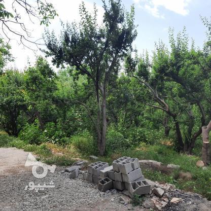 فروش زمین کشاورزی 500 متر در شهریار در گروه خرید و فروش املاک در تهران در شیپور-عکس2