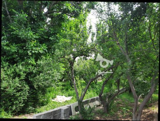 فروش زمین کشاورزی 500 متر در شهریار در گروه خرید و فروش املاک در تهران در شیپور-عکس5