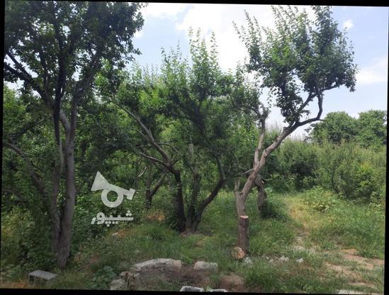 فروش زمین کشاورزی 500 متر در شهریار در گروه خرید و فروش املاک در تهران در شیپور-عکس3