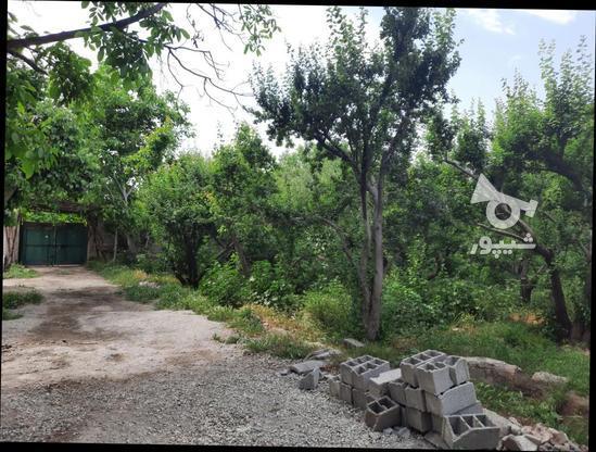 فروش زمین کشاورزی 500 متر در شهریار در گروه خرید و فروش املاک در تهران در شیپور-عکس1
