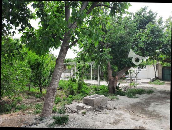 فروش زمین کشاورزی 500 متر در شهریار در گروه خرید و فروش املاک در تهران در شیپور-عکس6