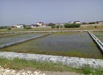 زمین تفکیکی واقع در(احمدکلا) در شیپور-عکس کوچک