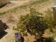 یک قطعه زمین ب مساحت 260 متر مربع پلاک دوم در شیپور
