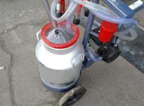 شیردوش ( دستگاه شیردوش ) بزدوش و گاودوش در شیپور-عکس کوچک