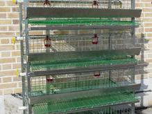 قفس نیمه اتوماتیک مرغ بلدرچین کبک قرقاول کبوتر در شیپور