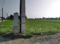 زمین مسکونی 1,800 متری در سرخرود در شیپور-عکس کوچک