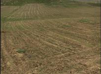 زمین 7 طناب 31500 متری در شیپور-عکس کوچک