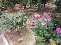 هزارمتر باغ شیک و سرسبز آبیک در شیپور-عکس کوچک